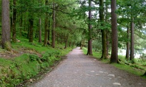 wicklow-path